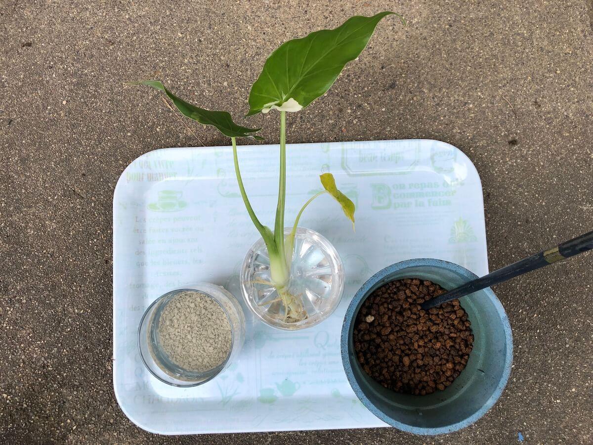 安く水耕栽培するための準備写真