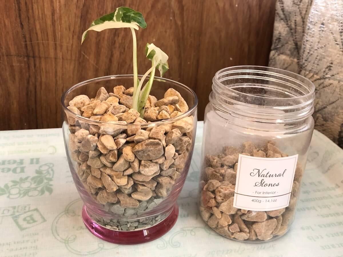 ミニストーンで斑入りクワズイモを植え込んだ写真