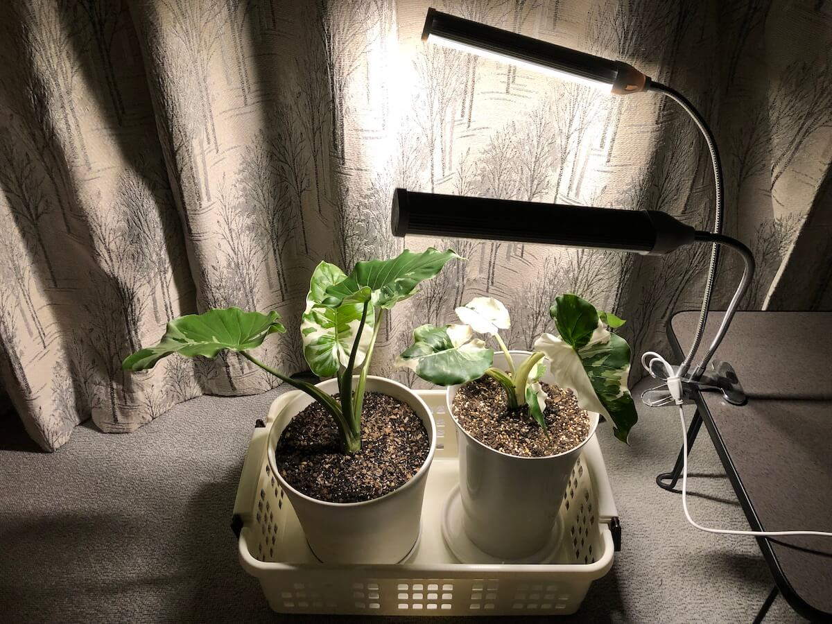 植物育成ライトの強光写真2