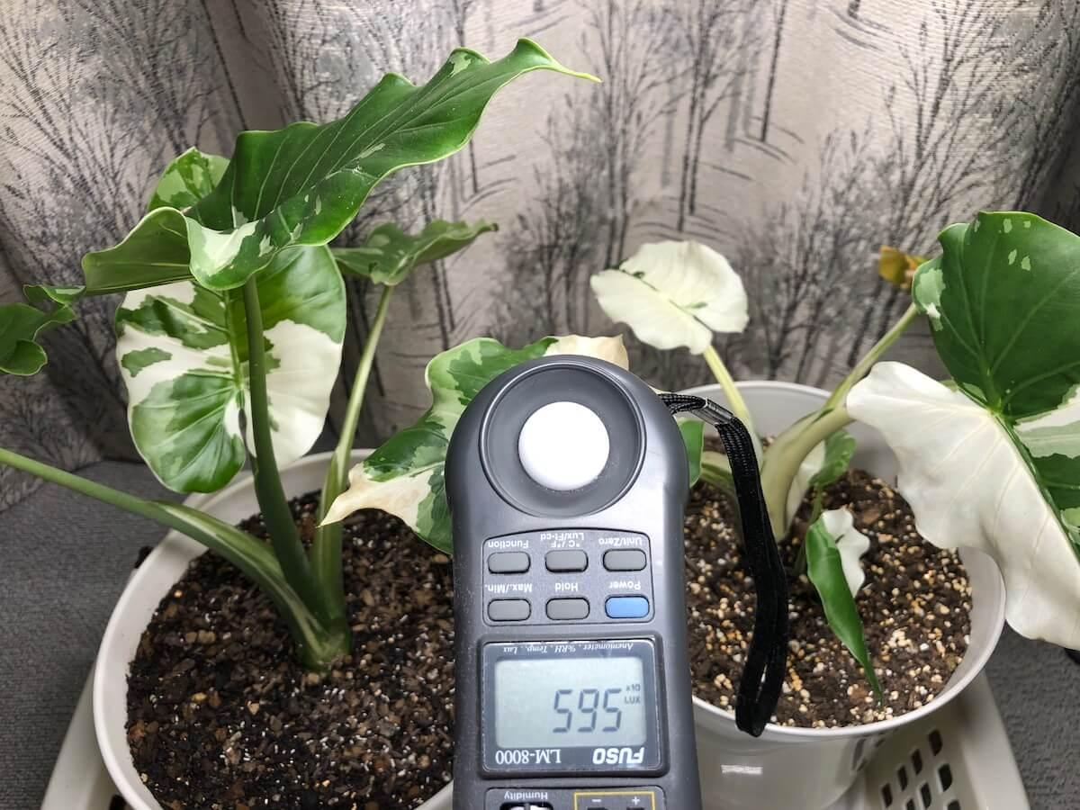 植物育成ライトの強光写真3