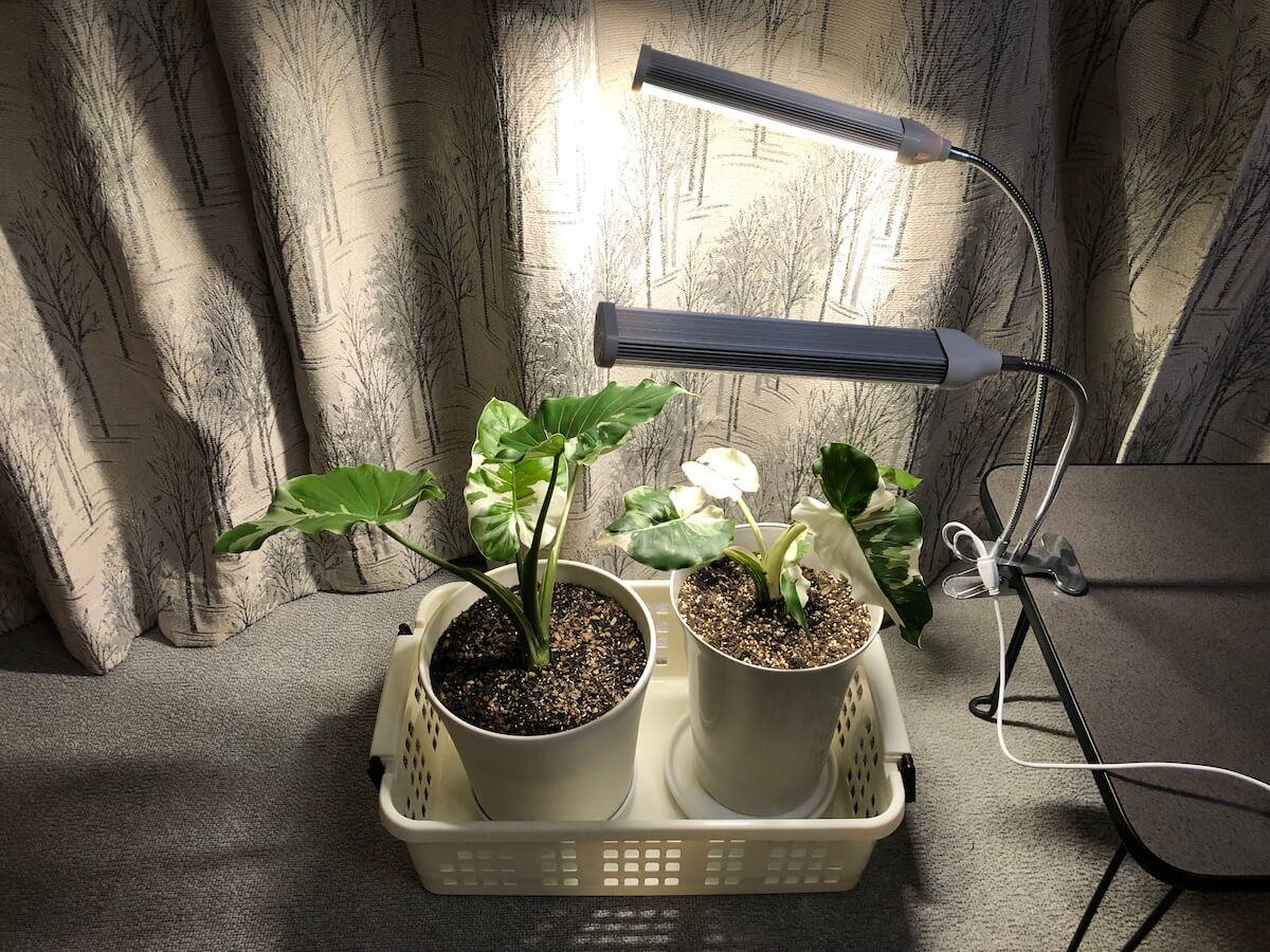 植物育成ライトの中光写真