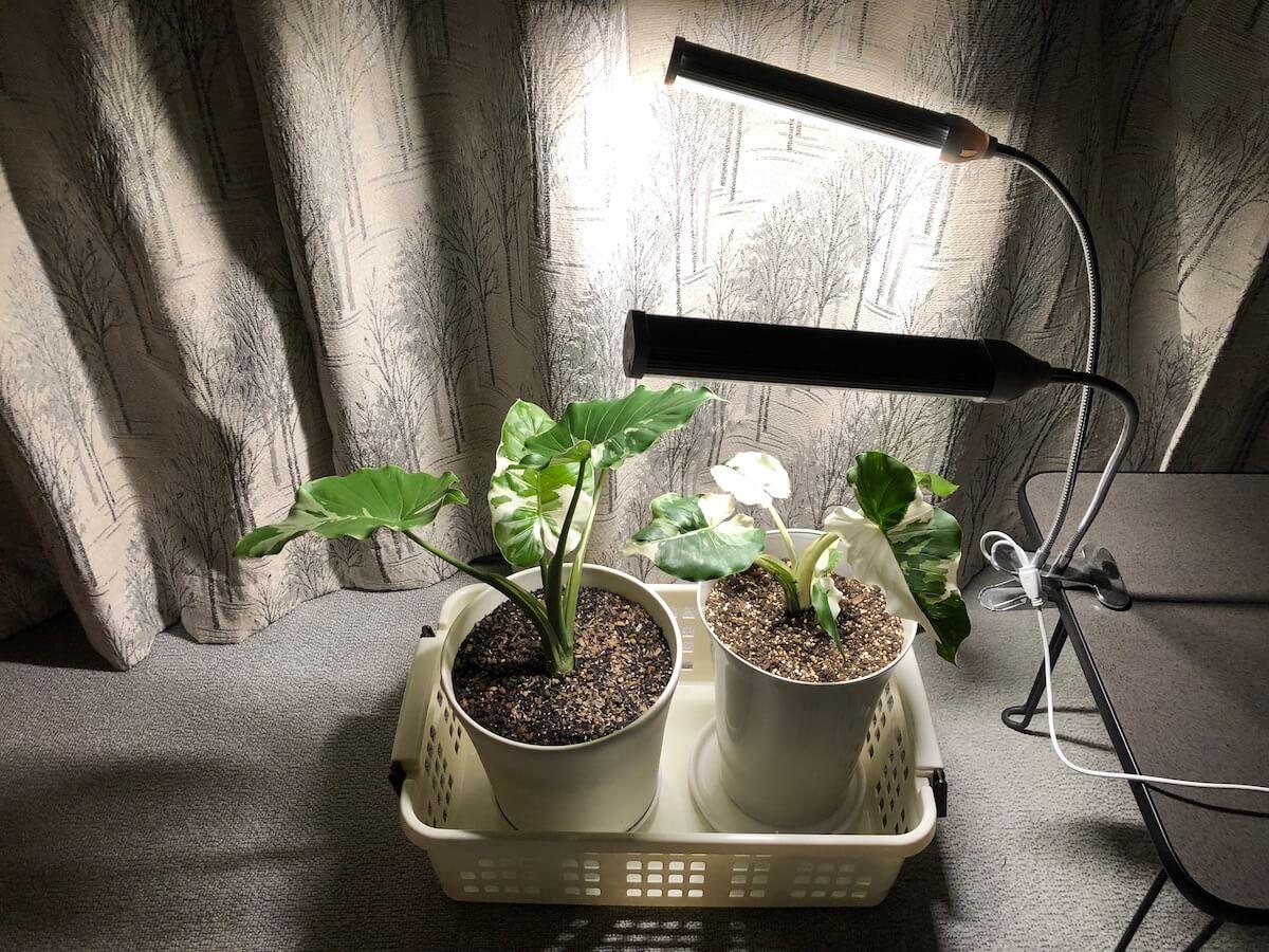植物育成ライトの中光写真2