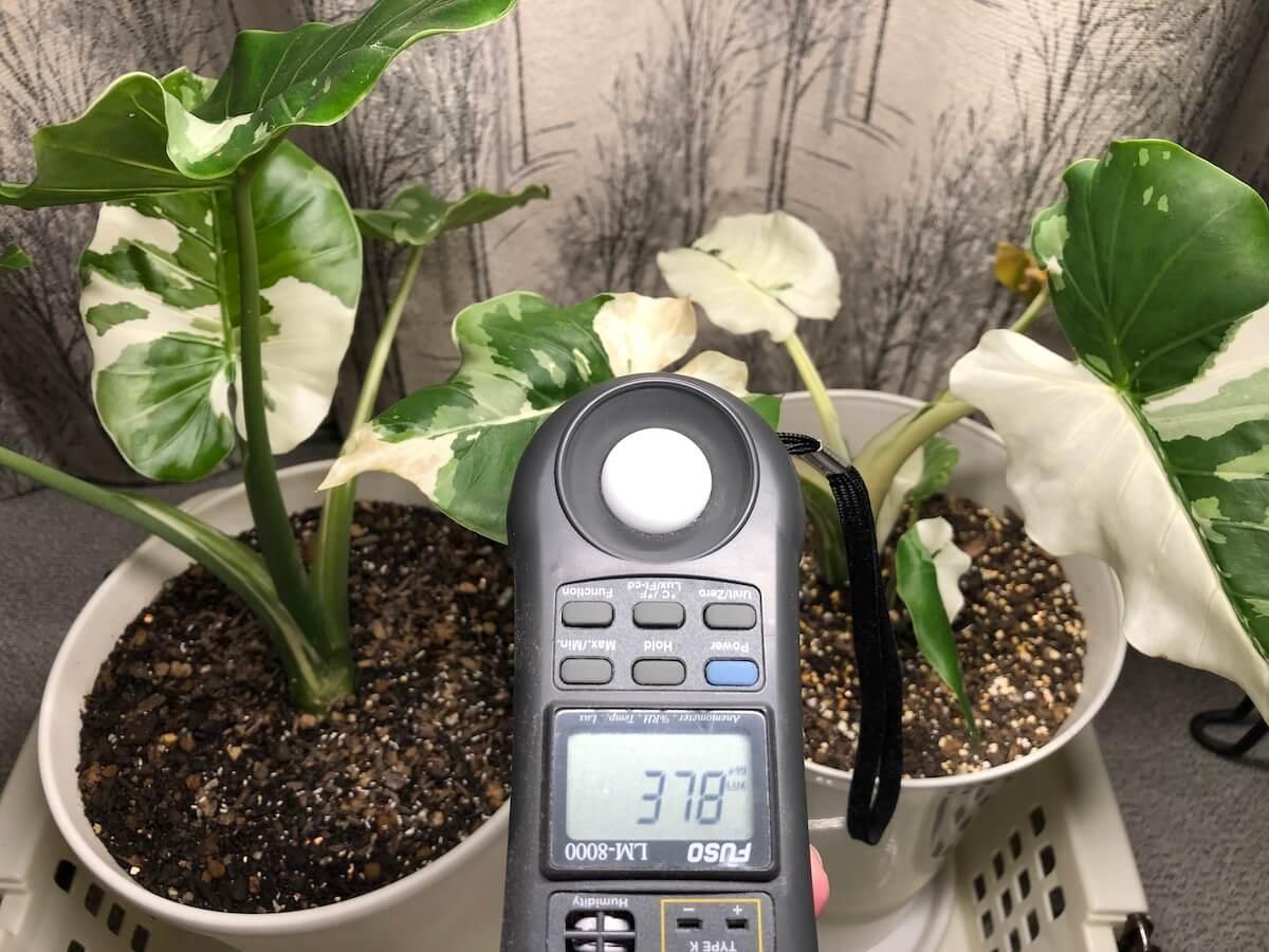植物育成ライトの中光写真3