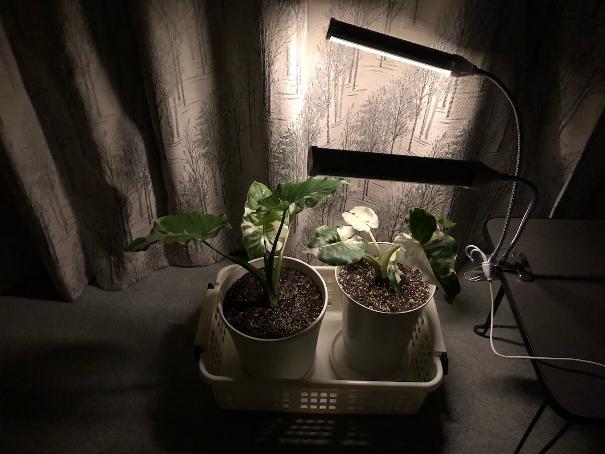 植物育成ライトの弱光写真2