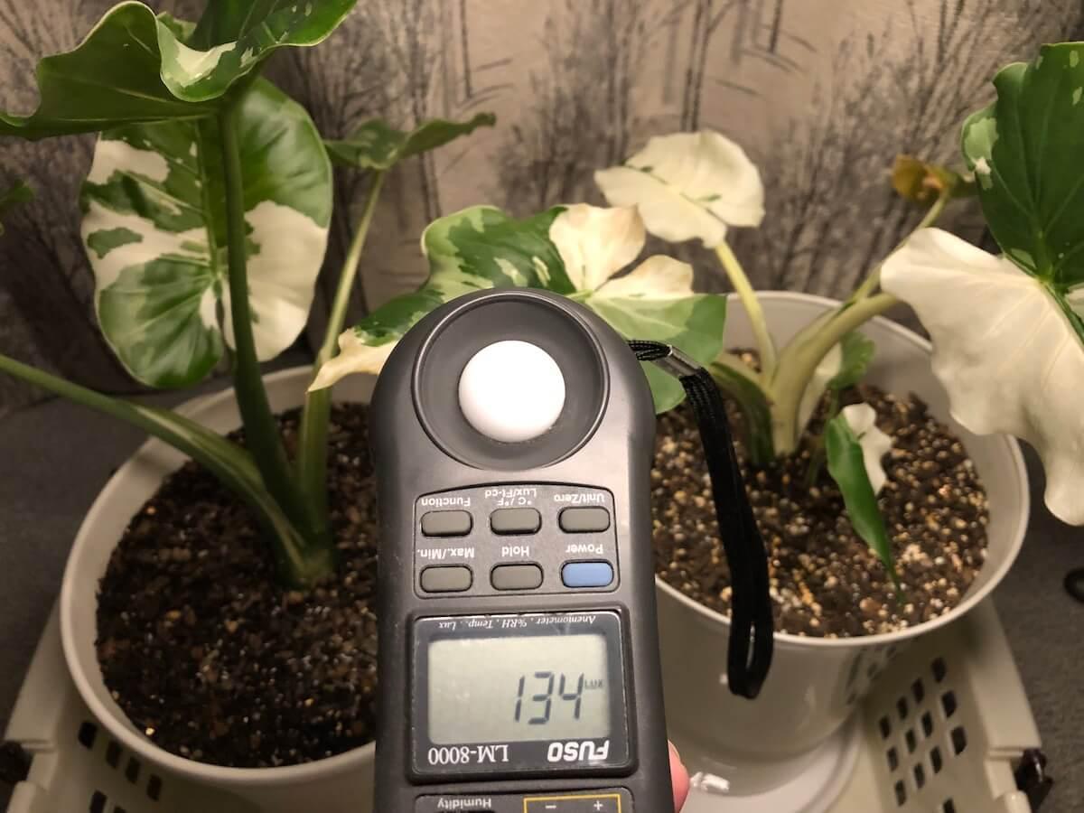 植物育成ライトの弱光写真3